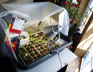 ghettogreenhouse