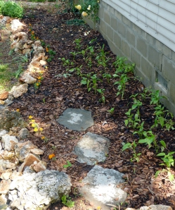 GardenPlanted