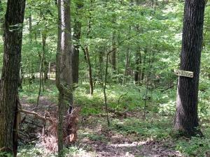 29 Woods