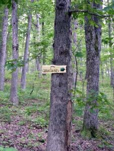 30 Woods